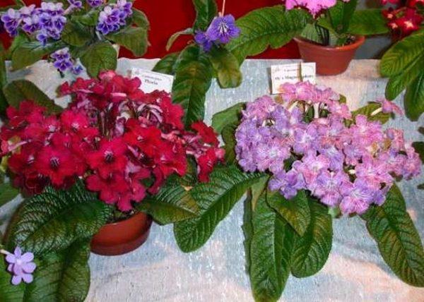 Различные сорта растения, выращенные на продажу