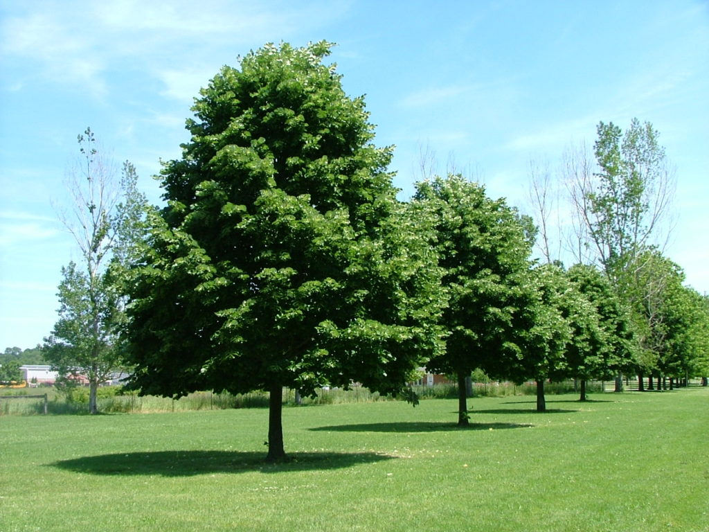 пошаговая инструкция изгороди из тонких стволов деревьев