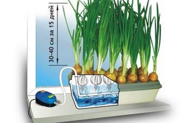 Вырастить зеленый лук на продажу поможет специальный контейнер с компрессором