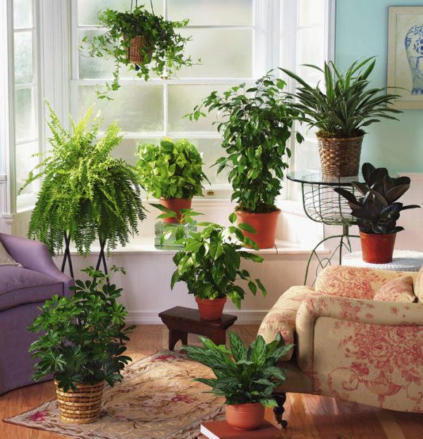 Декоративно-лиственные комнатные цветы в интерьере.