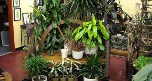 Красивые декоративные комнатные растения.