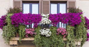 Цветущие и вьющиеся растения на балконе.