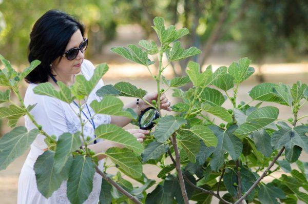 Растение зачастую подвержено различным заболеваниям и нападениям вредителей.