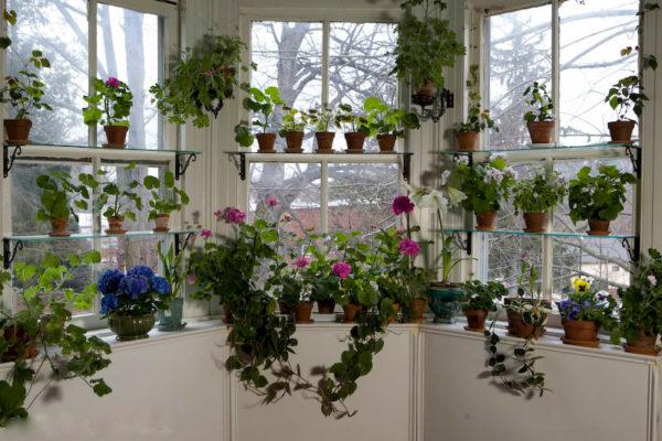 Много комнатных растений у большого оконного витража.
