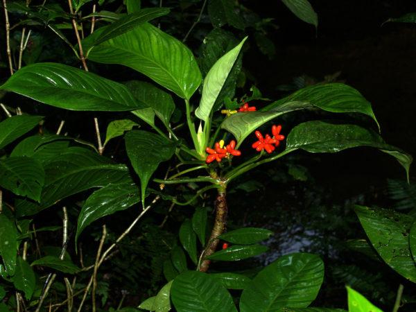 Растение с соцветиями.