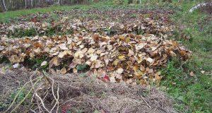 Сорняки, листья и мусор можно сжечь.