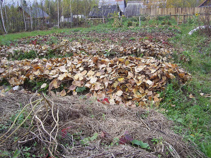 Подготовка огорода на зиму. Как готовить грядки осенью