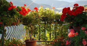 ампельные растения на балконе