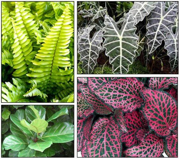 Пестрая, разнообразно окрашенная листва вариегатных растений.