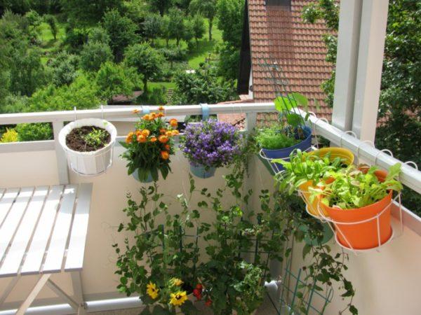 Комнатные цветы летом на балконе.