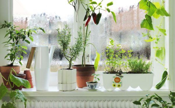 Комнатные растения на окне.