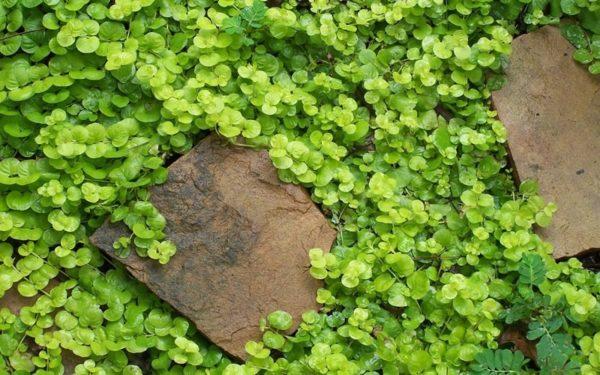 Растение возле камня.