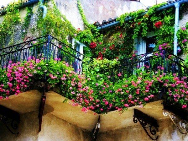 Вьющиеся культуры и низкорослые цветы на балконе.