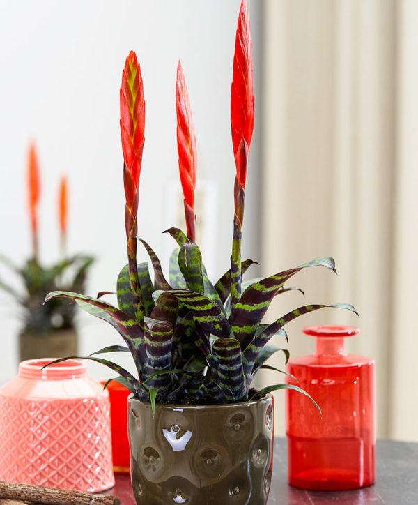 Растение в интерьере комнаты.