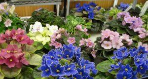 Разнообразие растений поражает