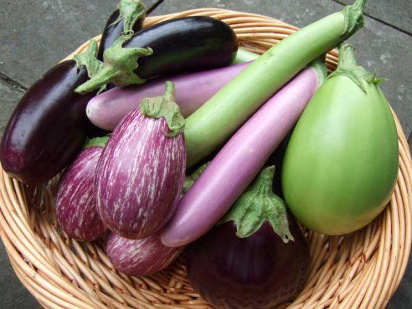 Баклажаны разных сортов отличаются по форме и цвету.