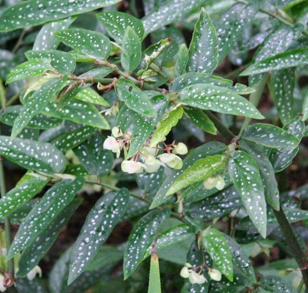 Быстрорастущие комнатные растения: список и рекомендации