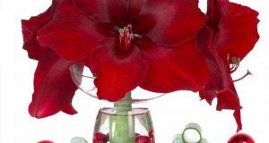 Красное соцветие.