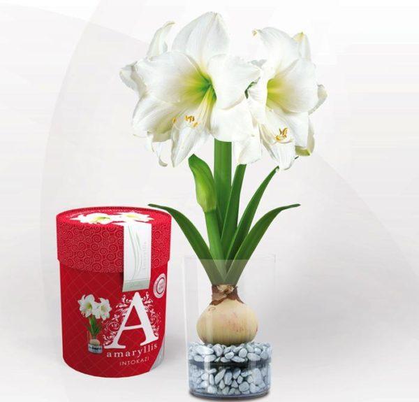 Подарочная упаковка для цветка.