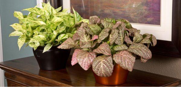 Растение на столе.