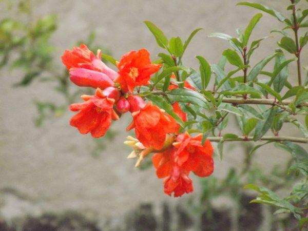 Красно-оранжевые цветки на дереве.