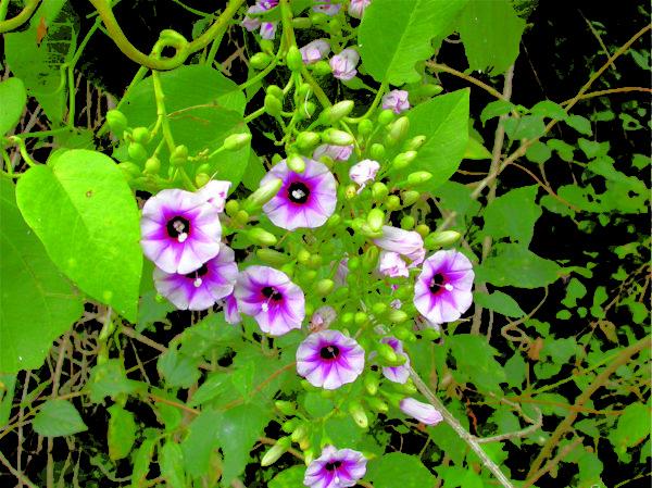 Растение на открытом участке.