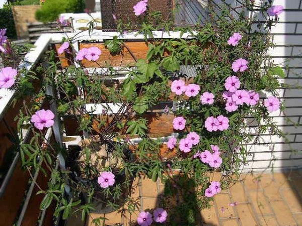Растение на балконе.