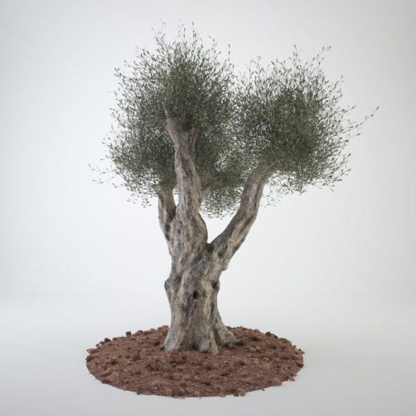 Растение с голым стволом.