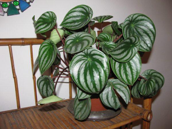 Растение в доме.