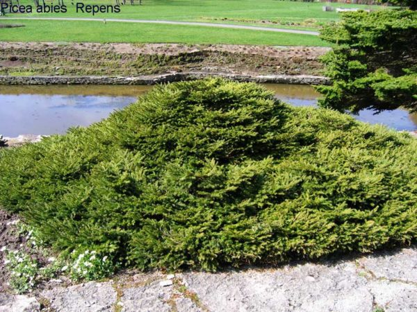 Растение возле водоема.