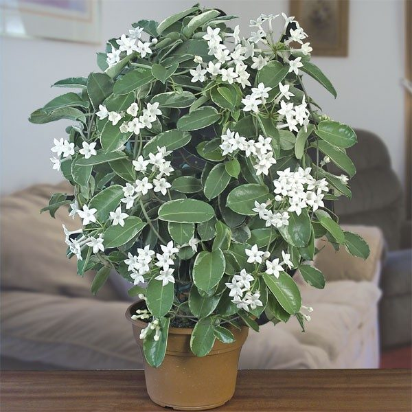 Контейнерное растение.
