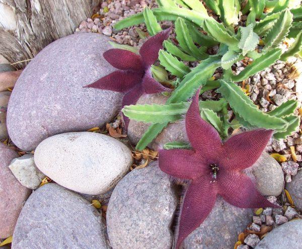 Растение на фоне камней.