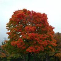 Изумительной красоты высокое дерево.