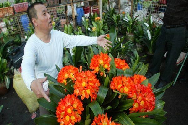 Огромное растение в садовом представительстве.