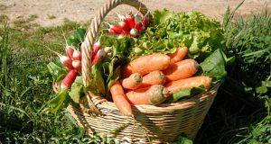 Органические природные удобрения позволяют получить чистый урожай.