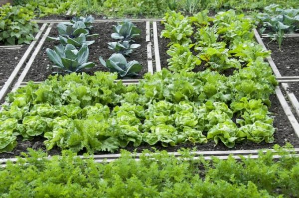 овощи в тени