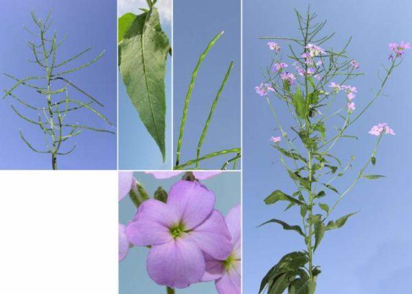 Вегетативные органы цветка.