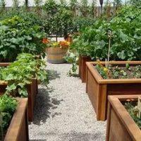 Урожайность овощей намного повышается.
