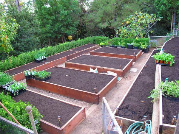 Выращивание овощей в повышенных наземных грядках.