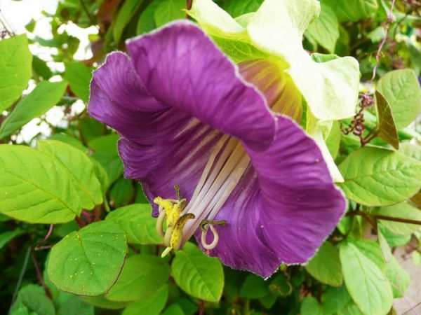 Цветок отличается невыразимым мзяществом.