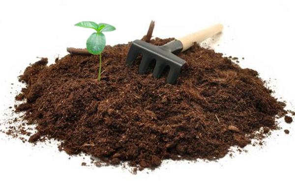 Подготовка почвы к посадке растения