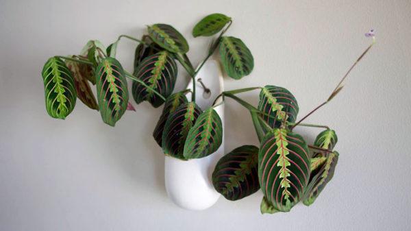 Растение на стене.