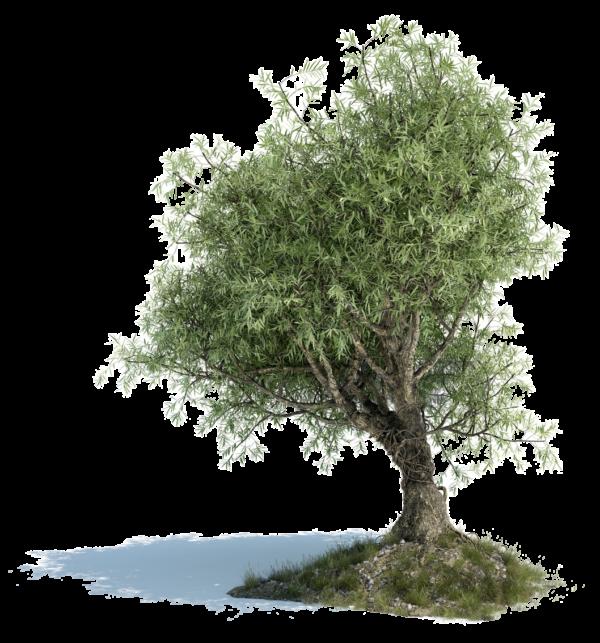 Зеленое дерево.