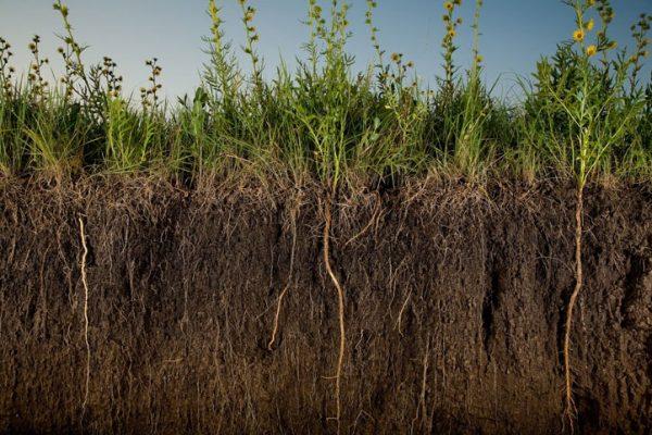 Посев сидератов позволяет обогатить грунт питательными веществами и улкчшить структуру почвы.