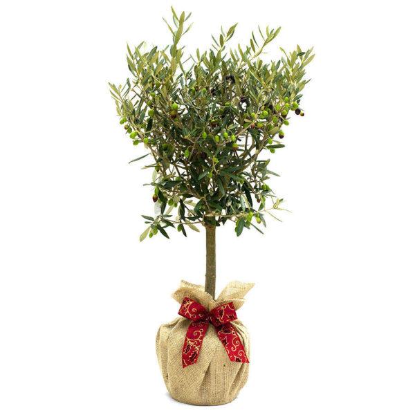 Дерево в подарочной упаковке.