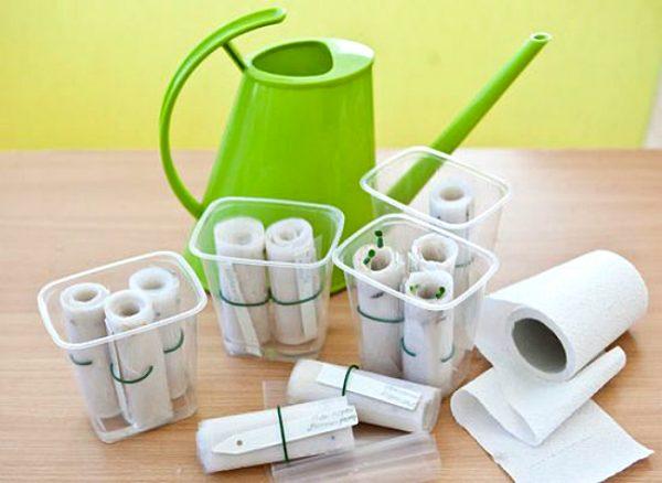 Туалетная бумага может использоваться для выращивания сеянцев овощей.