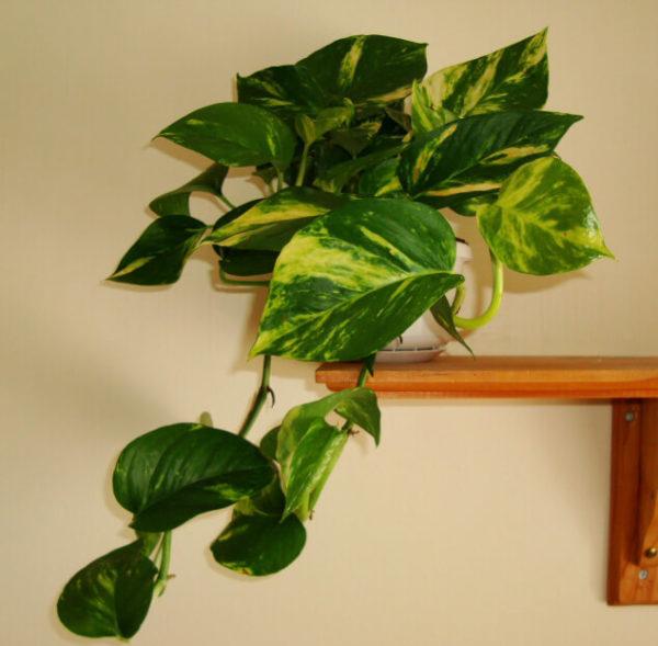 Растение на полке.