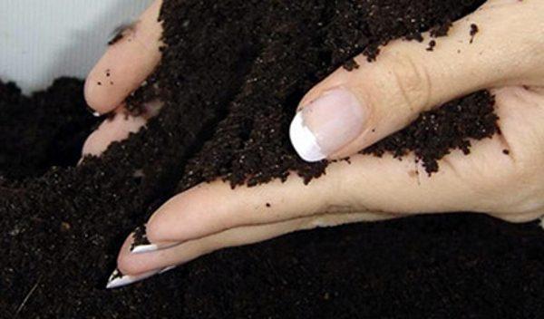 Подготовка почвы для высадки растения