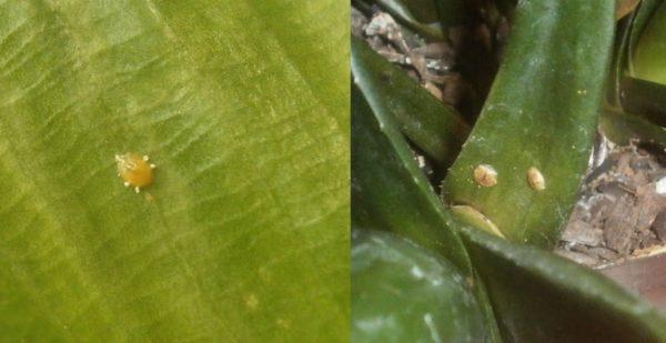 Насекомые на растении.
