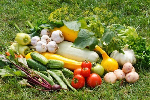 Урожай овощных культур очень радует.